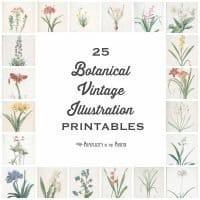 25 Vintage Botanical Illustrations: Free Printable Art