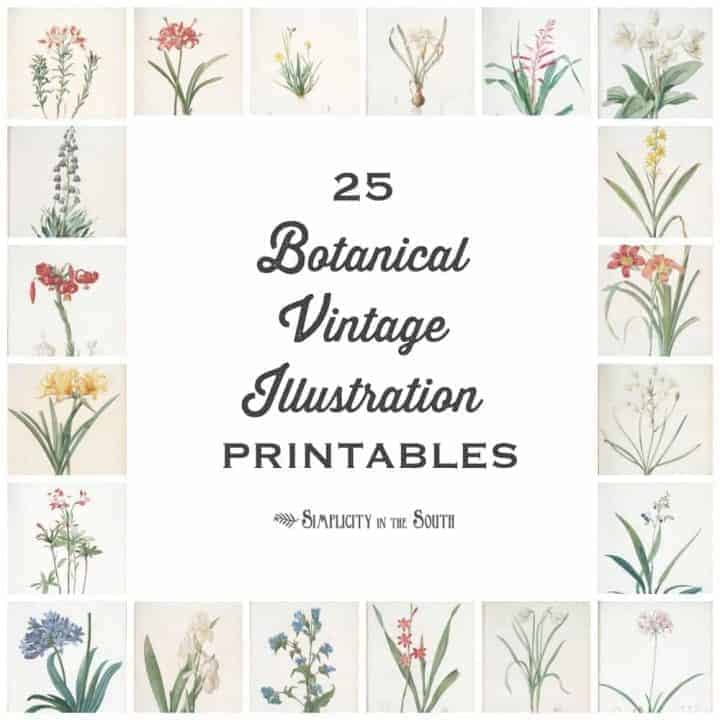 25 Botanical Vintage Illustration free printables for your art gallery