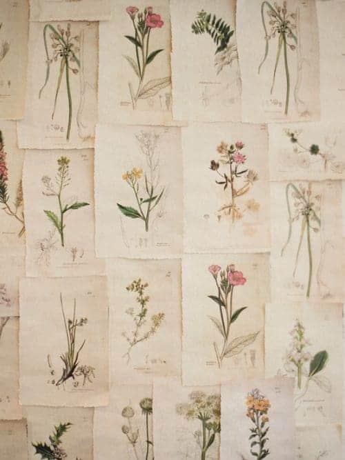 25 Vintage Botanical Illustrations: Free Printable Art 1